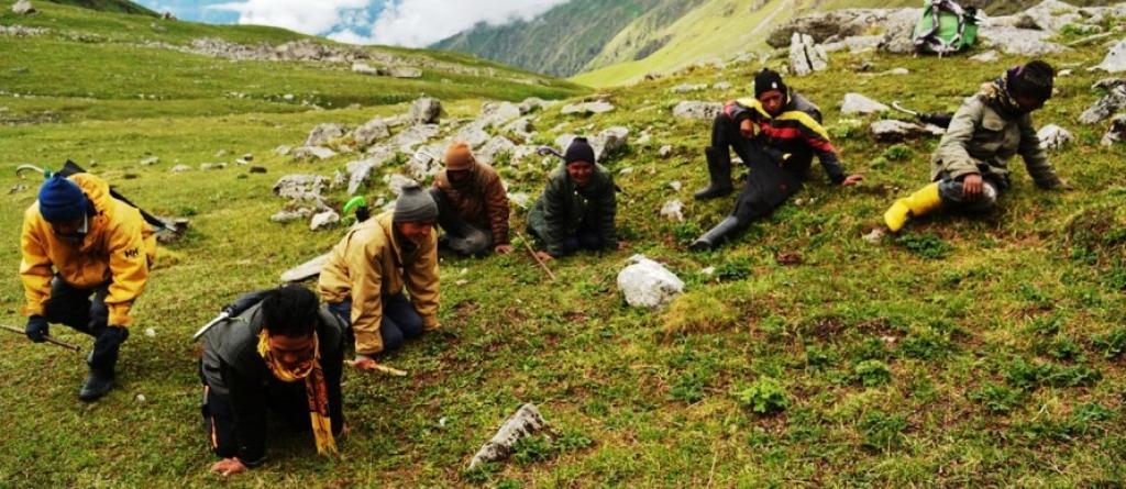 Tibet yaylalarında Tırtıl mantarı arayan bir gurup. Bulması  ve toplaması hayli zahmetli, çok büyük sabır gerektiren, kibrit çöpü kadar küçük bir mantardır.